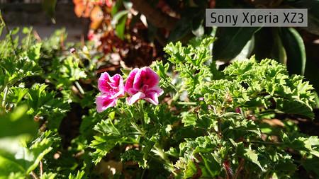 Sony Xperia Xz3 Macro Dia 01