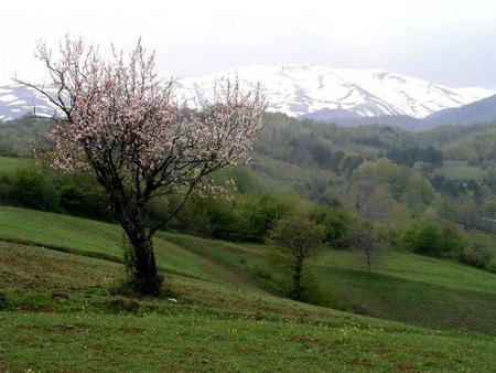 Bursa5