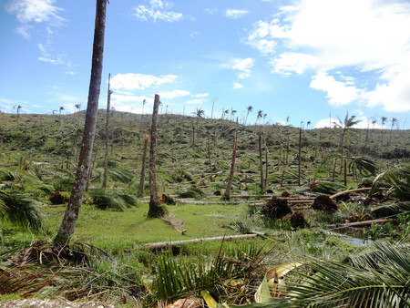 Deforestation In The Wake Of Typhoon Bopha In Cateel Davao Oriental