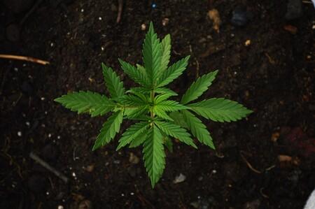 De Musico De Hip Hop A Tener Un Imperio Empresarial Basado En Cannabis Esta Es La Increible Historia De Snoop Dogg 2