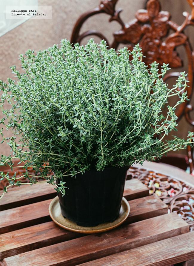 Por qu se mueren en casa las plantas arom ticas del - Plantas aromaticas mediterraneas ...
