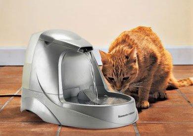 fuente-gatos.jpg