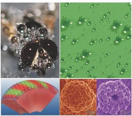 Los ojos de la mosca inspiran un sistema anti-vaho