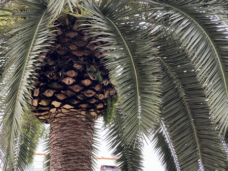 Imagen tomada con zoom óptico x3
