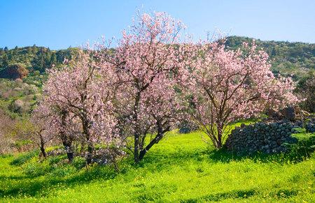 Fruta que da energía en primavera