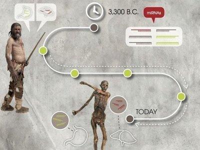 Los microARN pueden permanecer estables después de 5.300 años