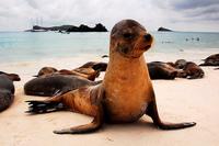 El mejor momento del año para viajar a las Islas Galápagos: La fauna