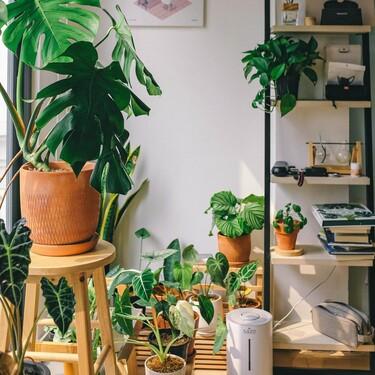 Cinco maceteros altos o con pedestal para elevar nuestras plantas y darle el protagonismo que merecen