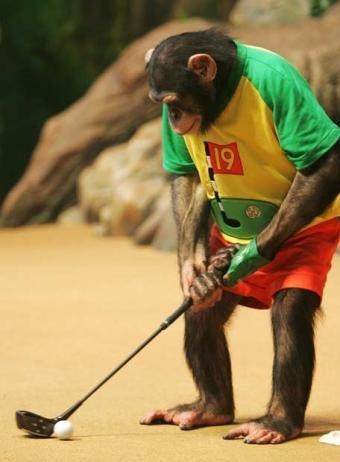 8 cosas que compartimos con los simios que no creíamos compartir (y II)