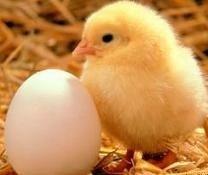 Trucos para determinar si un huevo es o no fresco