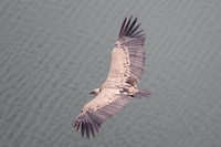 Aprende a fotografiar aves al vuelo