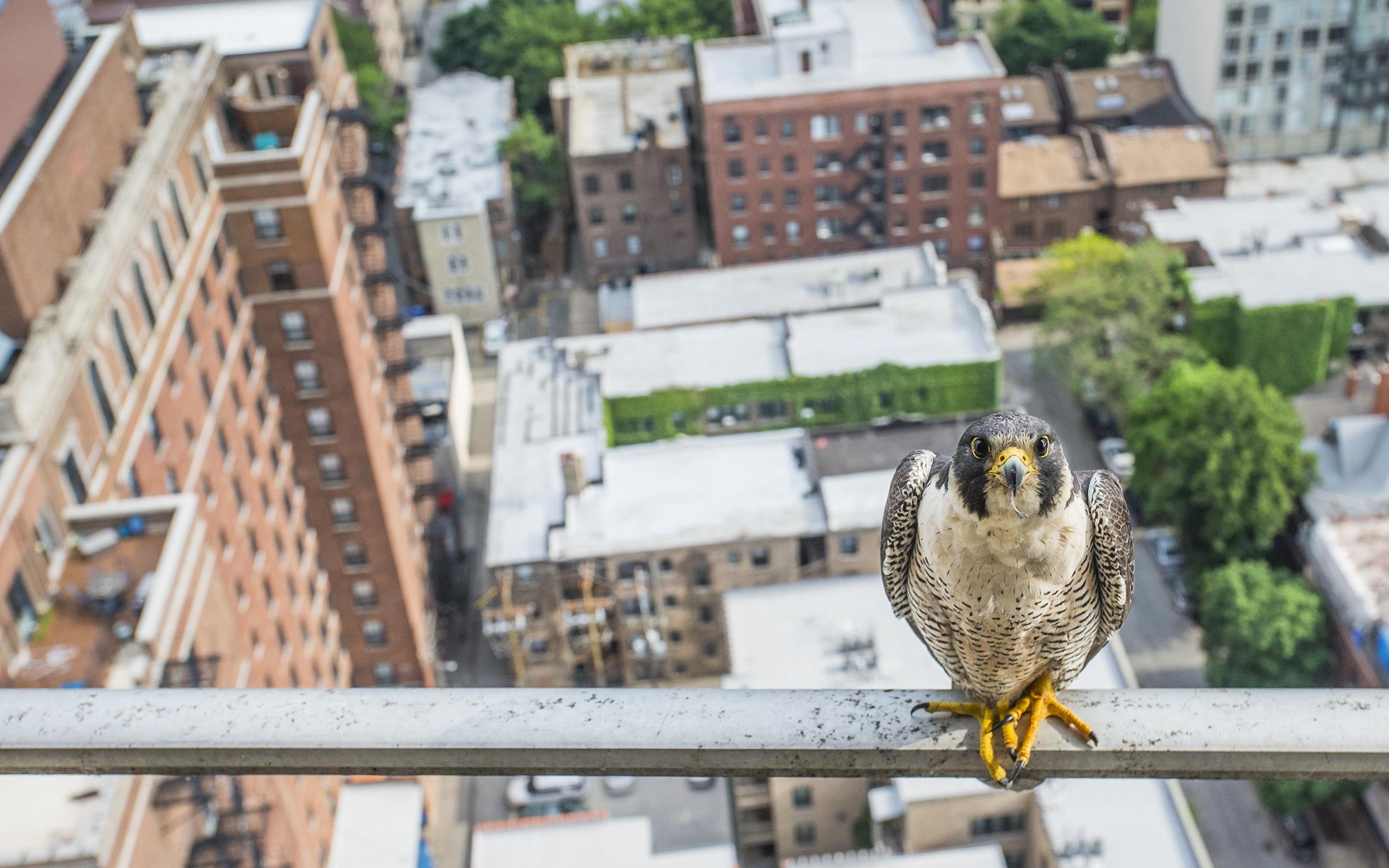 Foto de Environmental Photographer Of The Year 2016 (4/5)