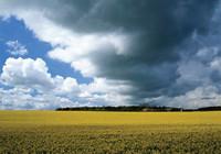 La nueva normativa europea sobre biocombustibles se retrasa hasta 2015