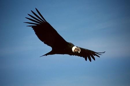 Avistamiento de aves en Argentina