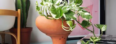 ¿Quieres que tus plantas sobrevivan este verano? La solución puede ser una maceta de autorriego tan bonita como ésta