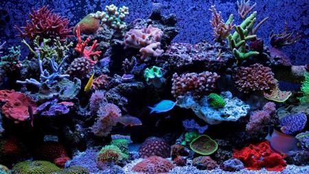 Salvar Corales Mexico