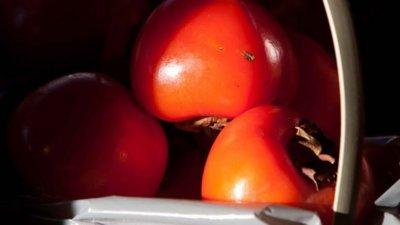 El caqui, una buena fuente de vitaminas y minerales en esta época del año