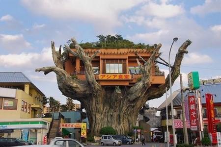 Un restaurante sobre los árboles en Japón