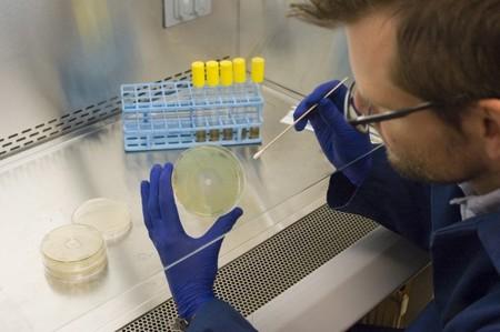 Investigación sobre microbios del coche
