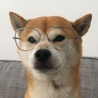 El multilingüe perro de Jaén que volvió a convertir en dadá a Twitter