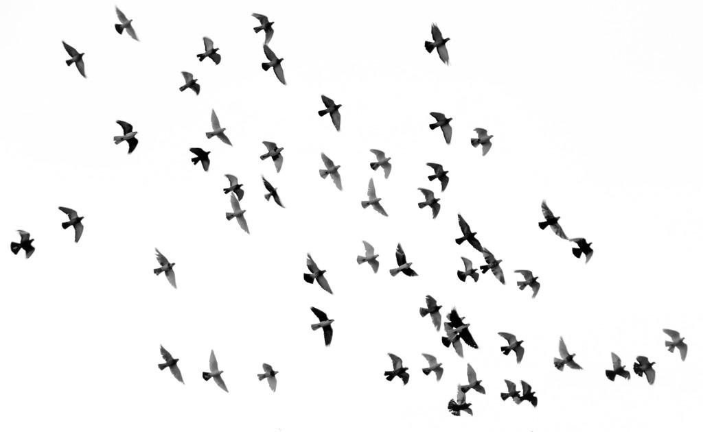 Desde 1970, se han perdido 3.000 millones de pájaros solo en Canadá y Estados Unidos: el resto del mundo no está mucho mejor
