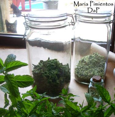 Como cultivar aromáticas en casa. La hierbabuena