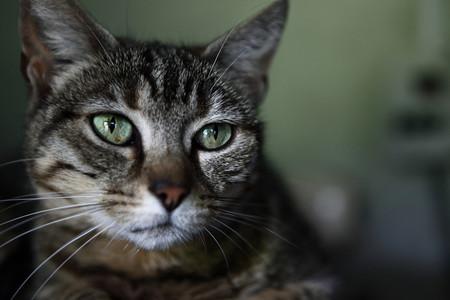 Como Fotografiar Mascotas I Gatos 12
