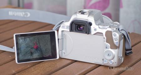 Canon Eos 250d Review 10