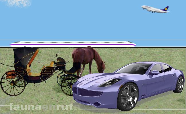 fauna en ruta: seguridad vial en tiempos de transición