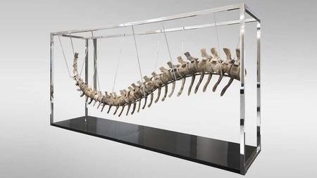 Más problemas con la cola de dinosaurio que se subastó en México: podría estar compuesta por fragmentos de diferentes especies