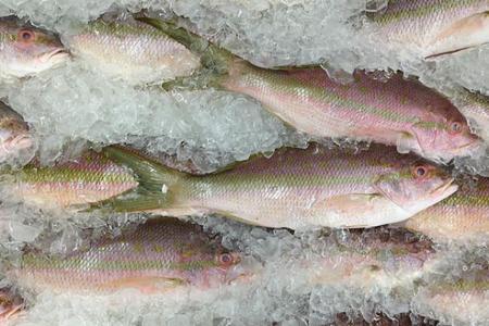 7 platos de pescado para maridar con una Mahou bien fría