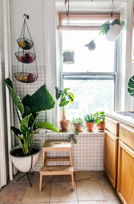 Plantas 10