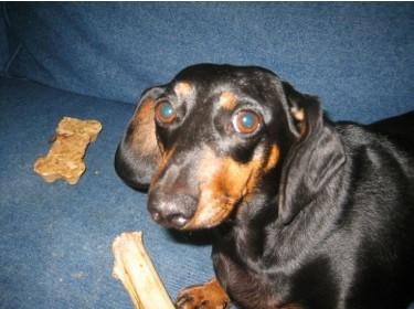 [CES 2007] Tecnología de Kodak para mejorar las fotos de animales