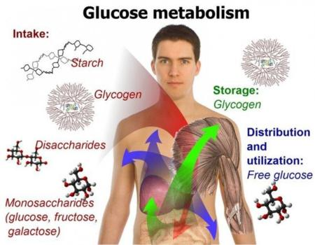 El metabolismo basal: ¿qué es? (I)