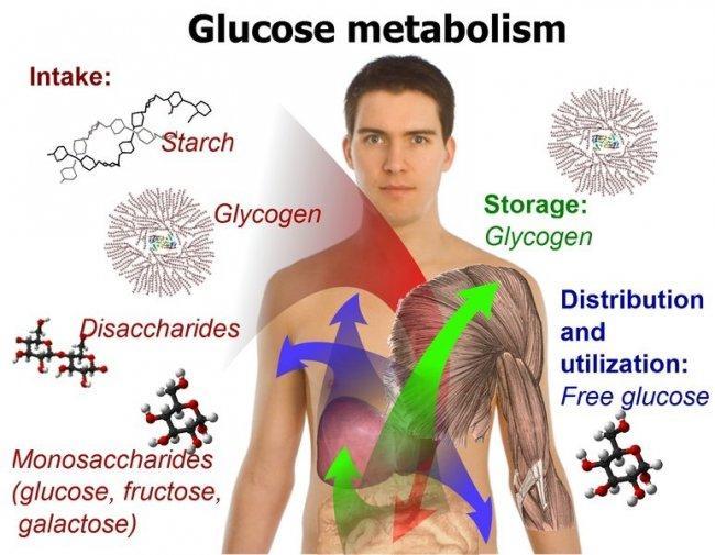 Seis cosas secretas que no aprendiste sobre metabolismo insulina