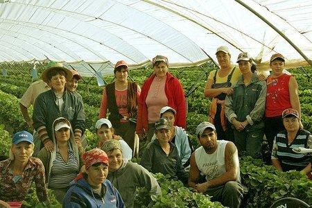 ¿Por qué necesitamos traer 3.000 trabajadores inmigrantes para recoger la fresa?