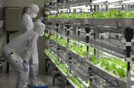 Toshiba ya tiene los primeros vegetales cultivados en entornos estériles de fábricas de semiconductores