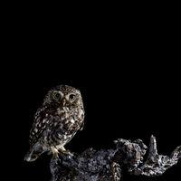 Este es Mario Cea Sanchez, es de Salamanca y es el mejor fotógrafo de pájaros del mundo
