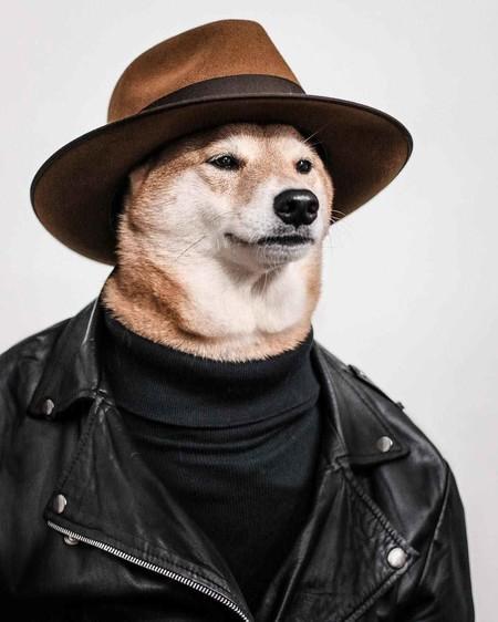 En El Nuevo Ano Chino Dedicado Al Perro Recordamos Los Mejores Looks De Nuestro Favorito Mensweardog 08