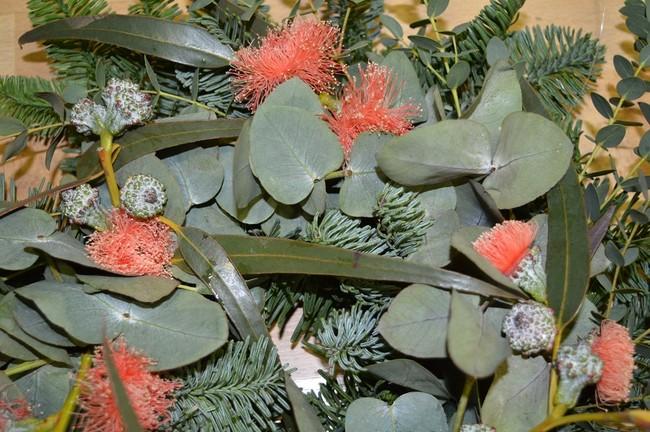 Eucalipto en flor