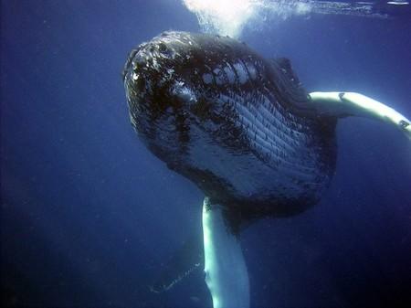 ¿Por qué la caca de ballena es buena para los océanos?