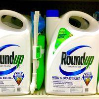 La histórica multa contra Monsanto hace temblar el mundo de la agrotecnología: Bayer ya pierde más de un 15% en bolsa