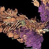 Modelos 3D de alta calidad de heces fósiles de hace 230 millones de años