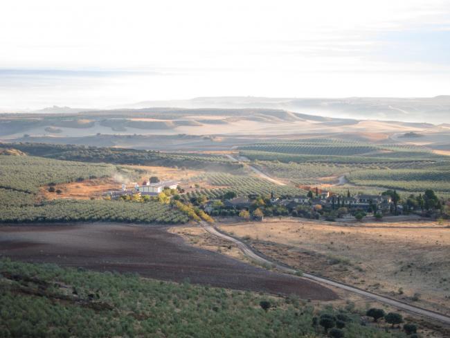Vista de Olivar Casas de Hualdo