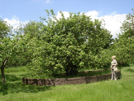 Apple Tree Woolsthorpe Manor