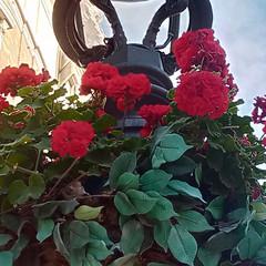 Foto 19 de 161 de la galería fotos-tomadas-con-el-wiko-view3-pro en Xataka Móvil
