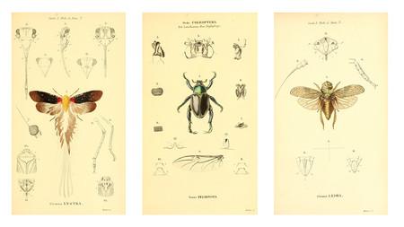 Ilustracion Insectos Dibujo Antiguo