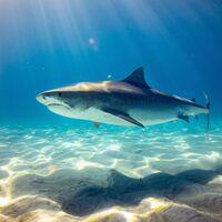 Hace 19 millones de años, los tiburones estuvieron a punto de desaparecer de la faz de la Tierra y no sabemos por qué