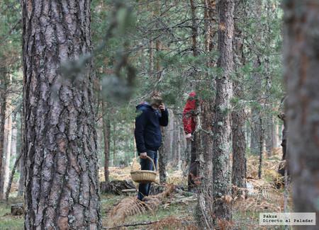 Pasear por el monte para buscar setas, trucos y consejos