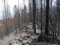 Razones para no quemar bosques